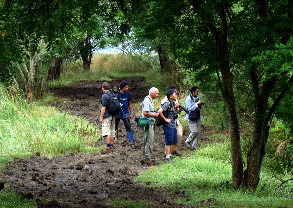 Braving the mud to look for warblers. Photo by Maia Tañedo.