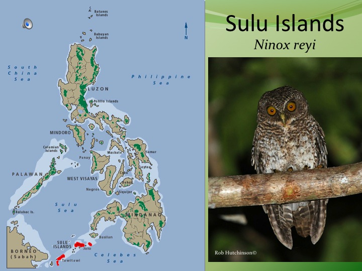 "Big, variable but usually has the darkest barring.Song extraordinarily distinct. Not like most owls---rapid toneless clucking percussive series. Local name ""luk-luk""! Only on rather small islands, but does occur around villages. Sulu, Siasi, Tawi Tawi and the adjacent Sanga Sanga and Bongao, Sibutu. Split & elevated to full species."