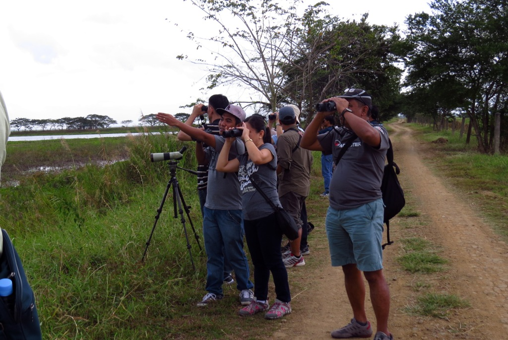 Birding along the roads in Candaba. Photo by Maia Tanedo.
