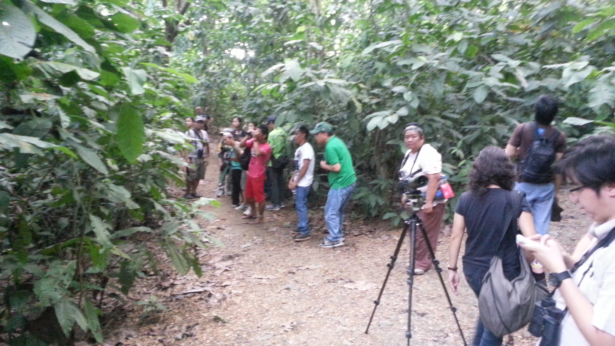 Guides and participants birding in the LMEP mini-forest. Photo by Jun Osano.