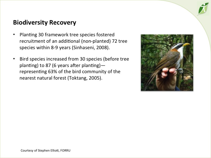 6th International Hornbill Conference, Dr. David Neidel, slide 10