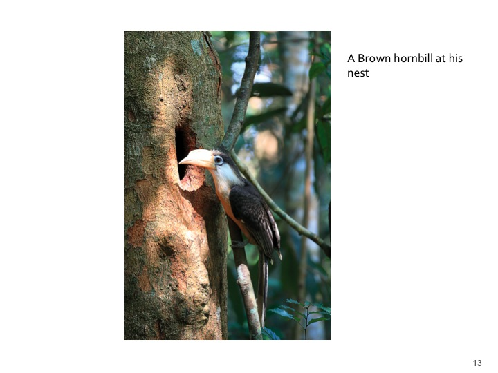 Dr. Woraphat Arthayukti, 6th International Hornbill Conference Manila, Philippines - Slide 13