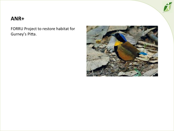 6th International Hornbill Conference, Dr. David Neidel, slide 27 http://www.flickr.com/photos/prasit_chansareekorn/8237673464/ �