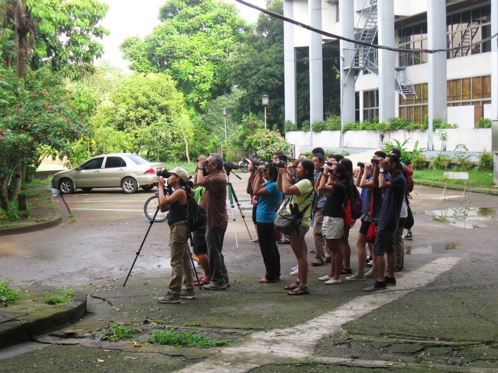 Birding in the UP Diliman campus. Photo by Maia Tanedo
