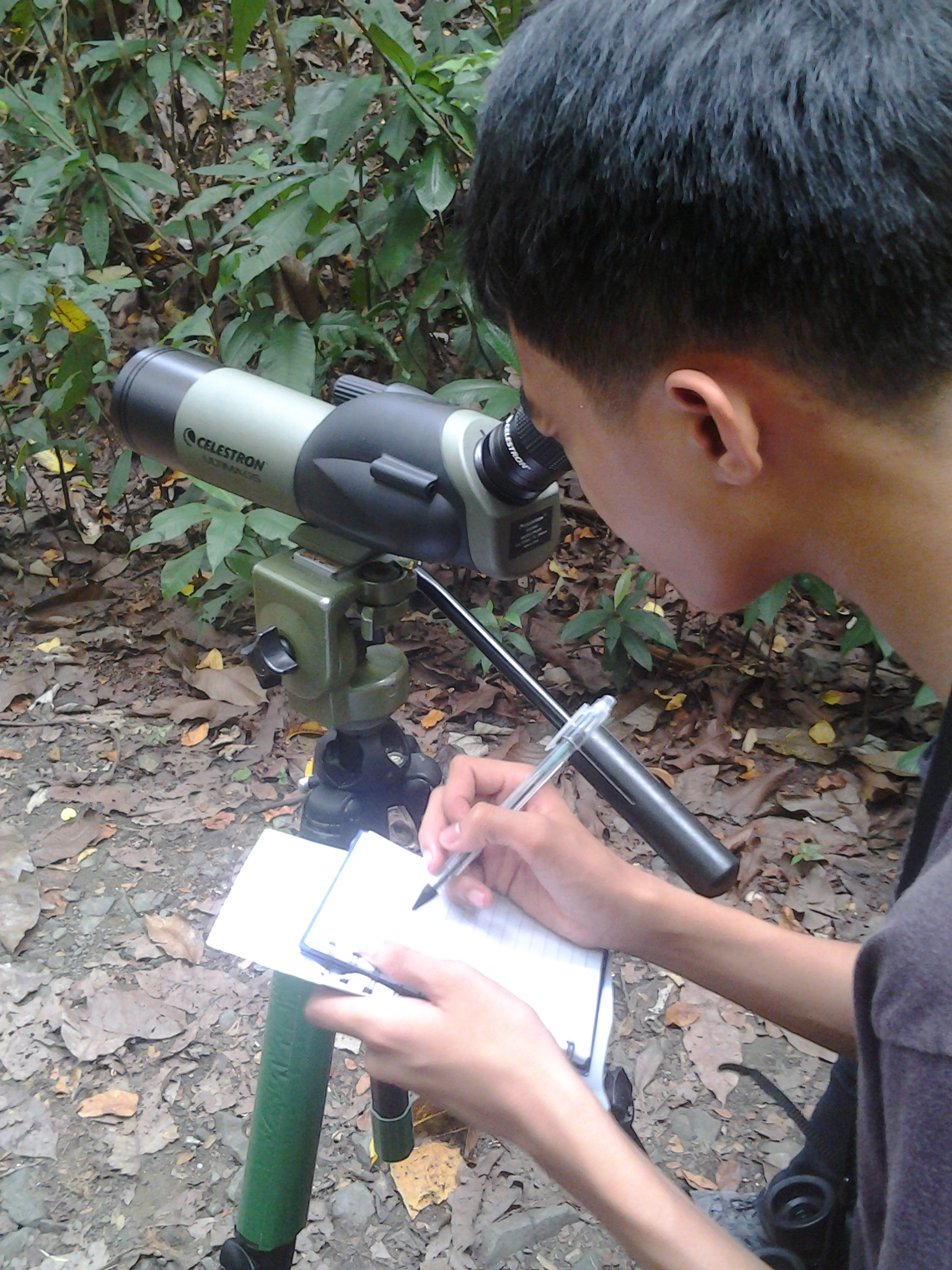 Sketching the Spotted Wood-Kingfisher through the scope. Photo by Maia Tanedo.