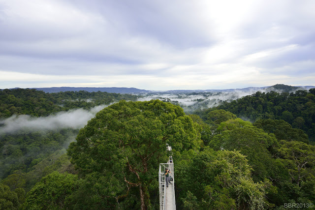 View at the Canopy walkway, Ulu Temburong National Park