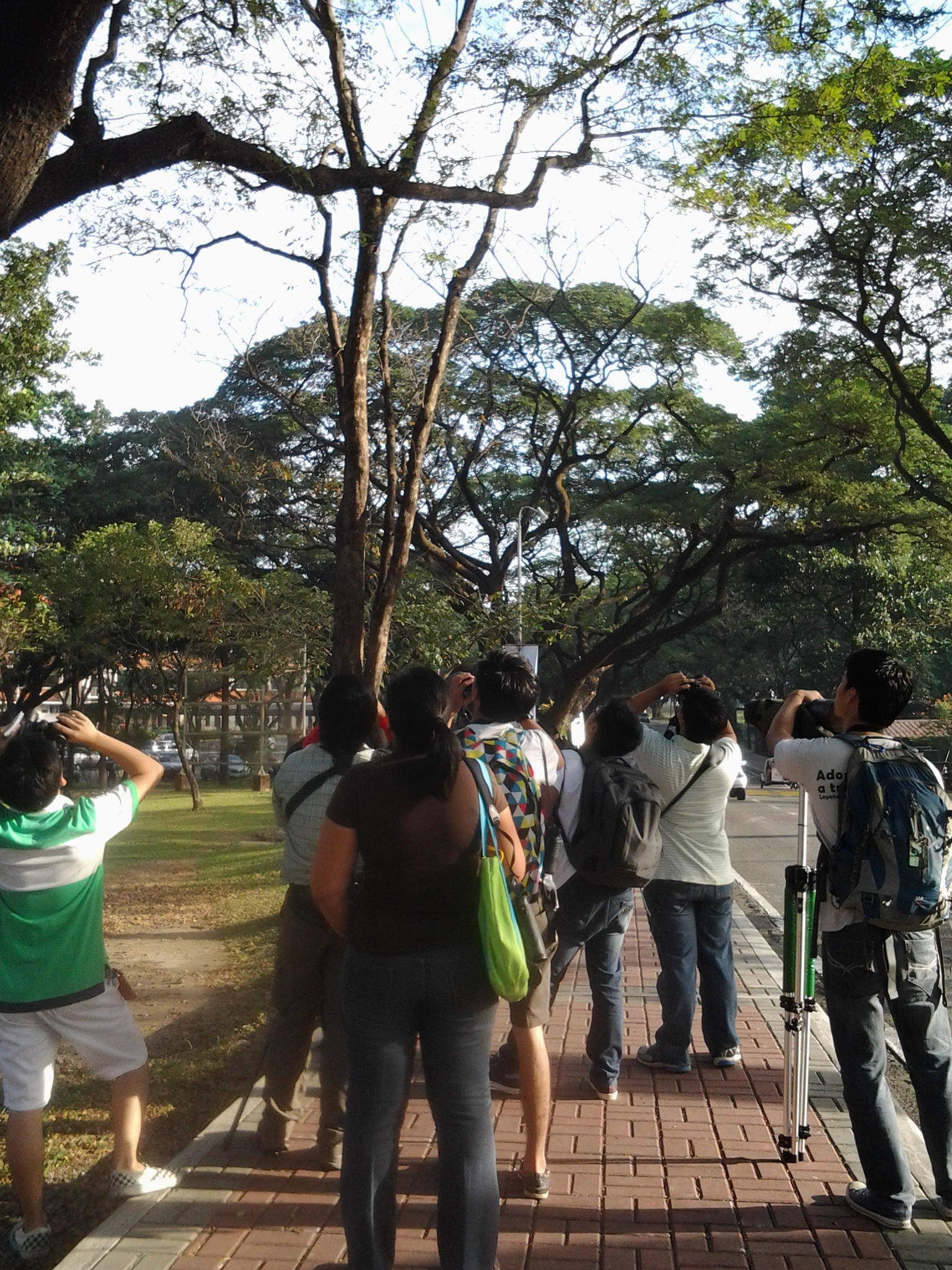 Discovering birds in their campus. Photo by Maia Tanedo
