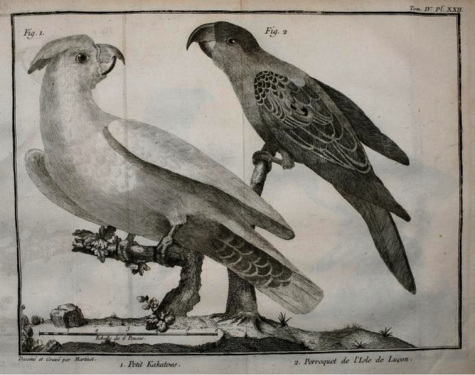 Brisson: (left) Petit Kakatoes (Philippine Cockatoo) ; (right) Perroquet de l'Isle de Luçon (Blue-naped parrot)