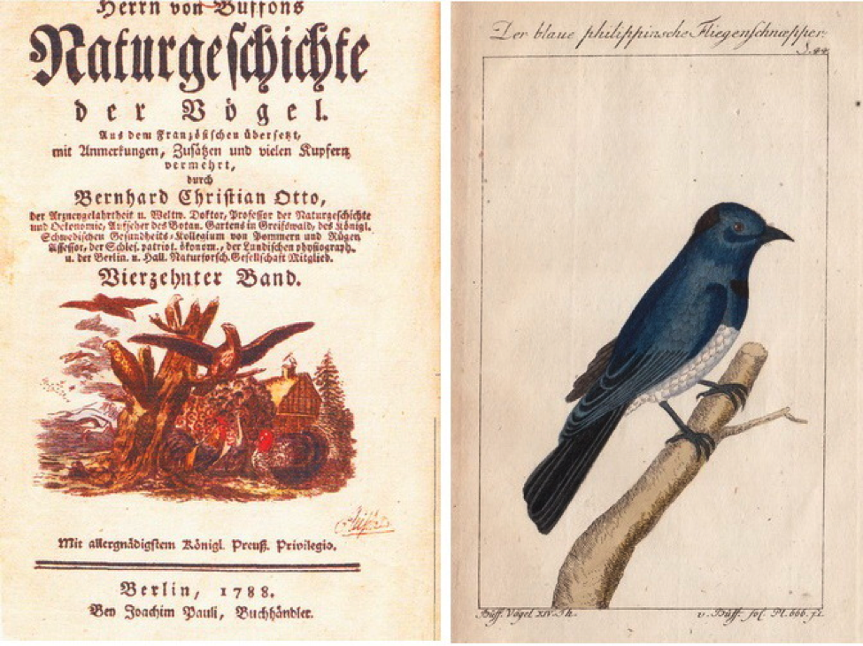 Naturgeschichte der Vögel: (left) title page of volume 15; (right) Der blaue philippinische Fliegenschnapper (literally Blue Philippine Flycatcher) - Black-naped Monarch