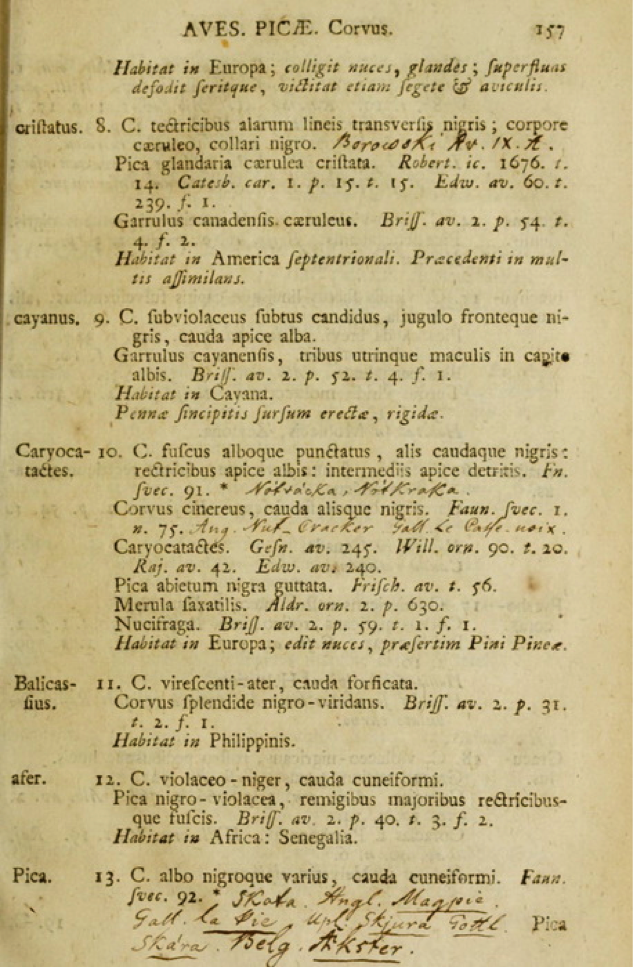 Page 157 of the 12th edition (1766) of Systema Naturae with a description of the Balicassiao (bird number 11 Corvus balicassius) with the statement Habitat in Philippinis (lives in the Philippines)