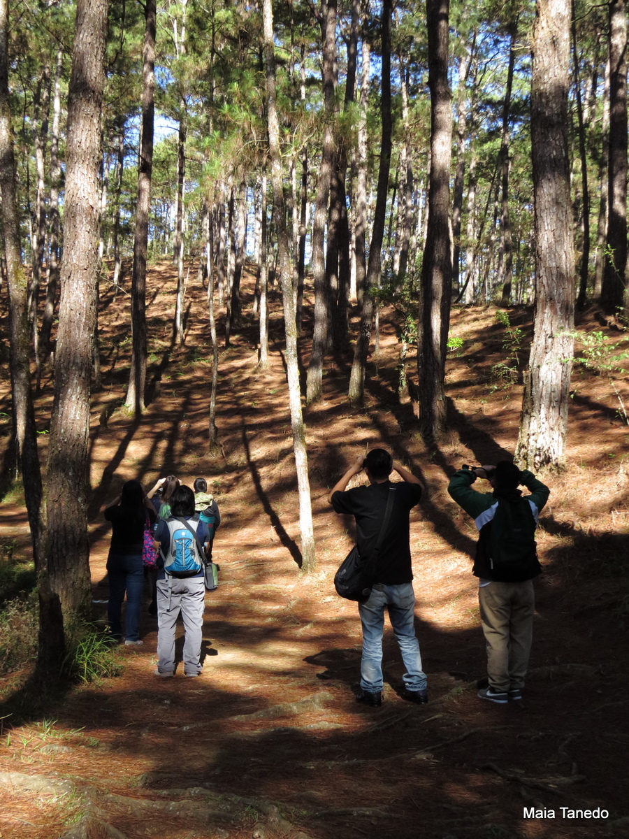 Guided trip participants birding in the Eco Trail.