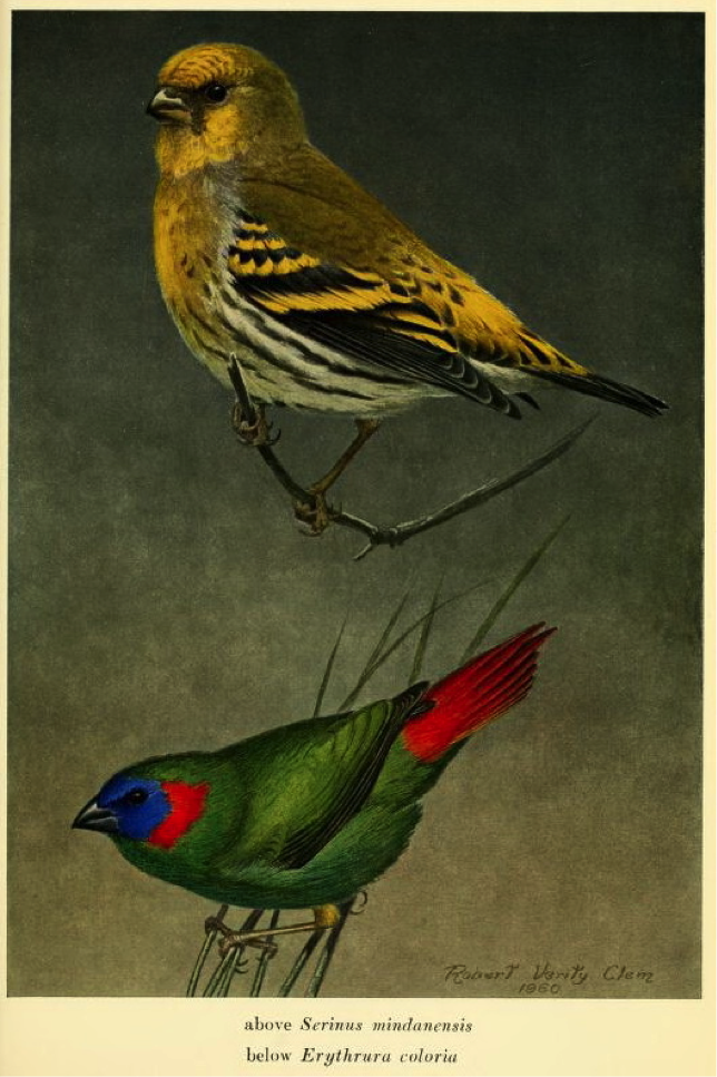 Ripley and Rabor in Postilla (1961): Mountain Serin and Red-eared Parrotfinch