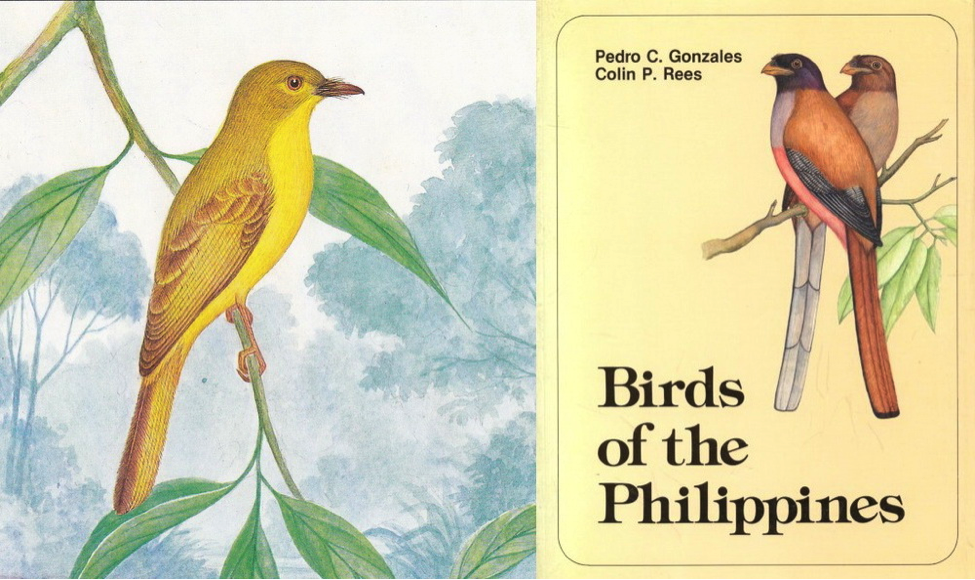 Gonzales and Rees' Birds of the Philippines (1988): Citrine Canary-Flycatcher and Book Cover