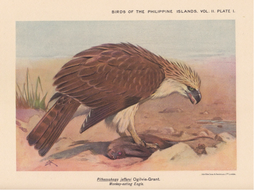 Hachisuka's Birds of the Philippines (1931): Philippine Eagle