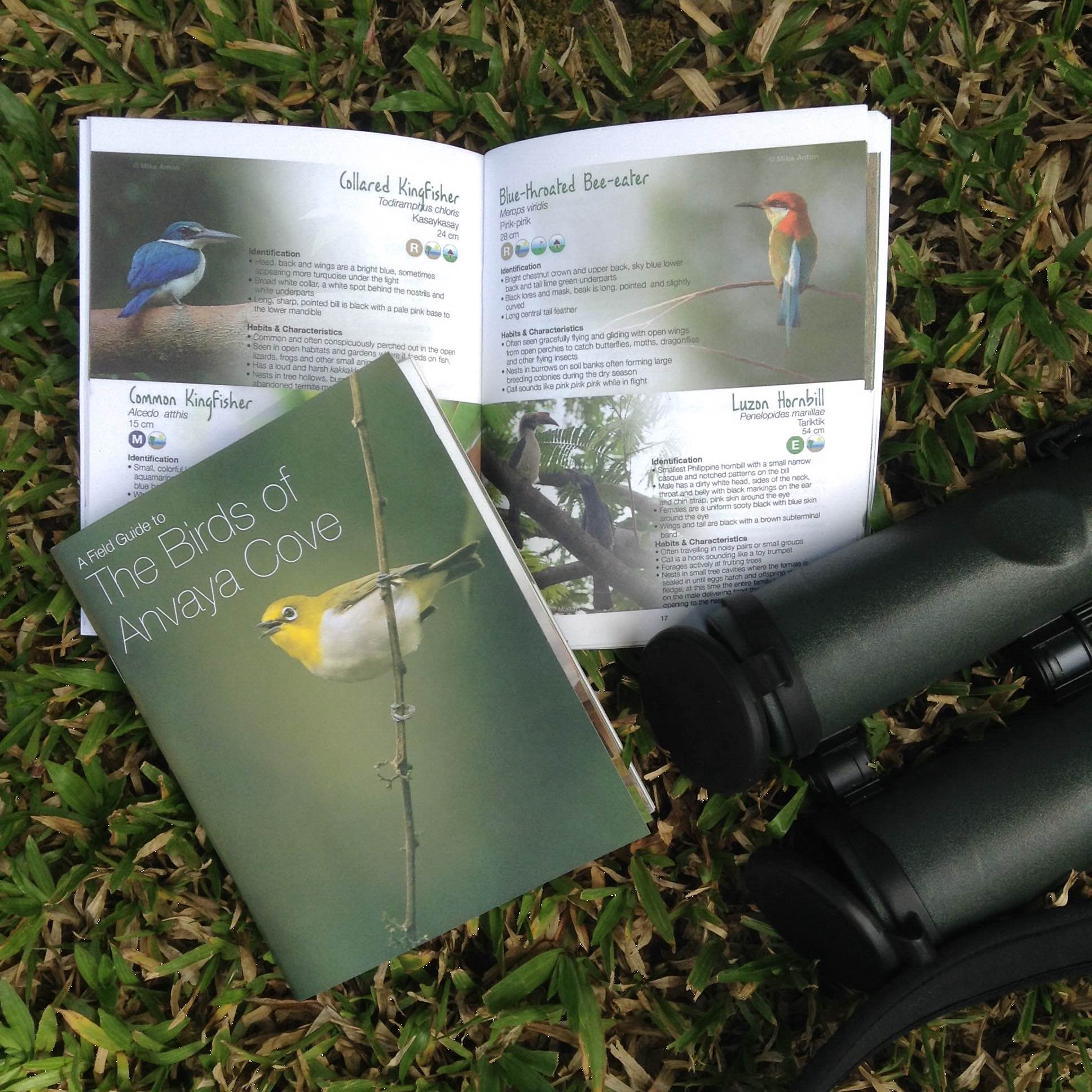 A Field Guide to The Birds of Anvaya Cove