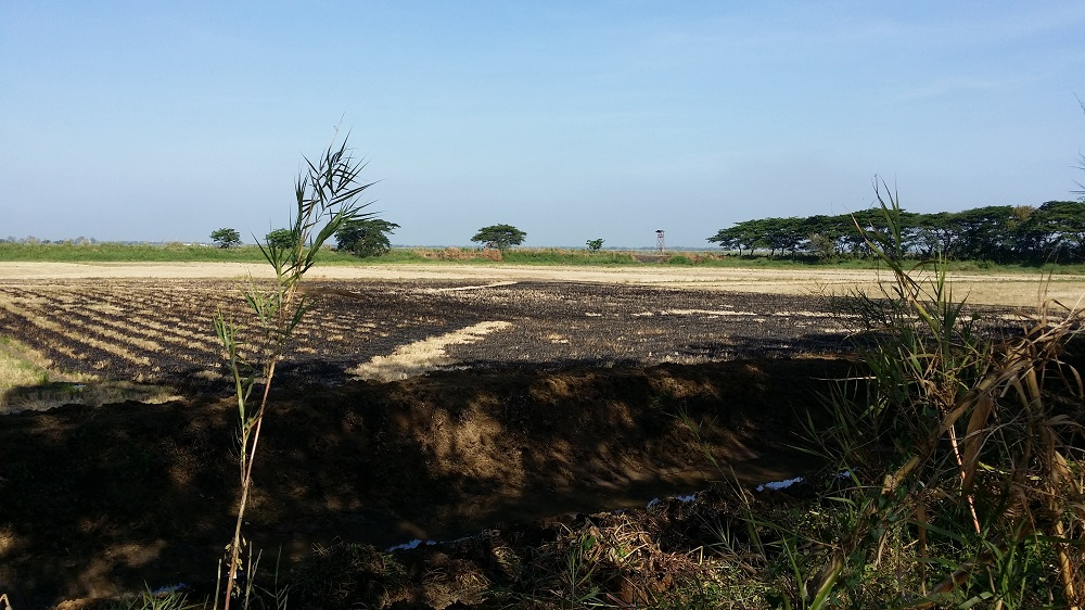 6 CANAL DIGGING BURNED FIELDS