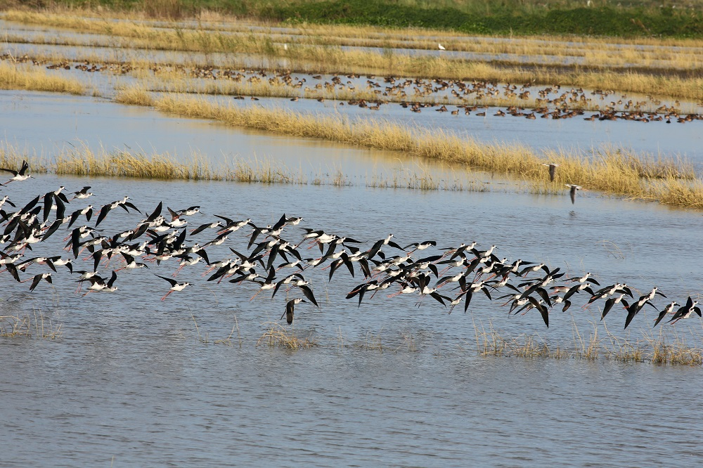 The pond where the Common Shelduck was spotted. Photo by Irene Dy.