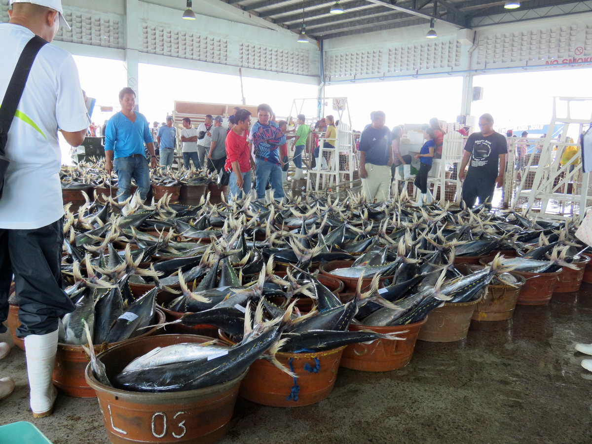 Baby tuna catch at the Gen San fishing port