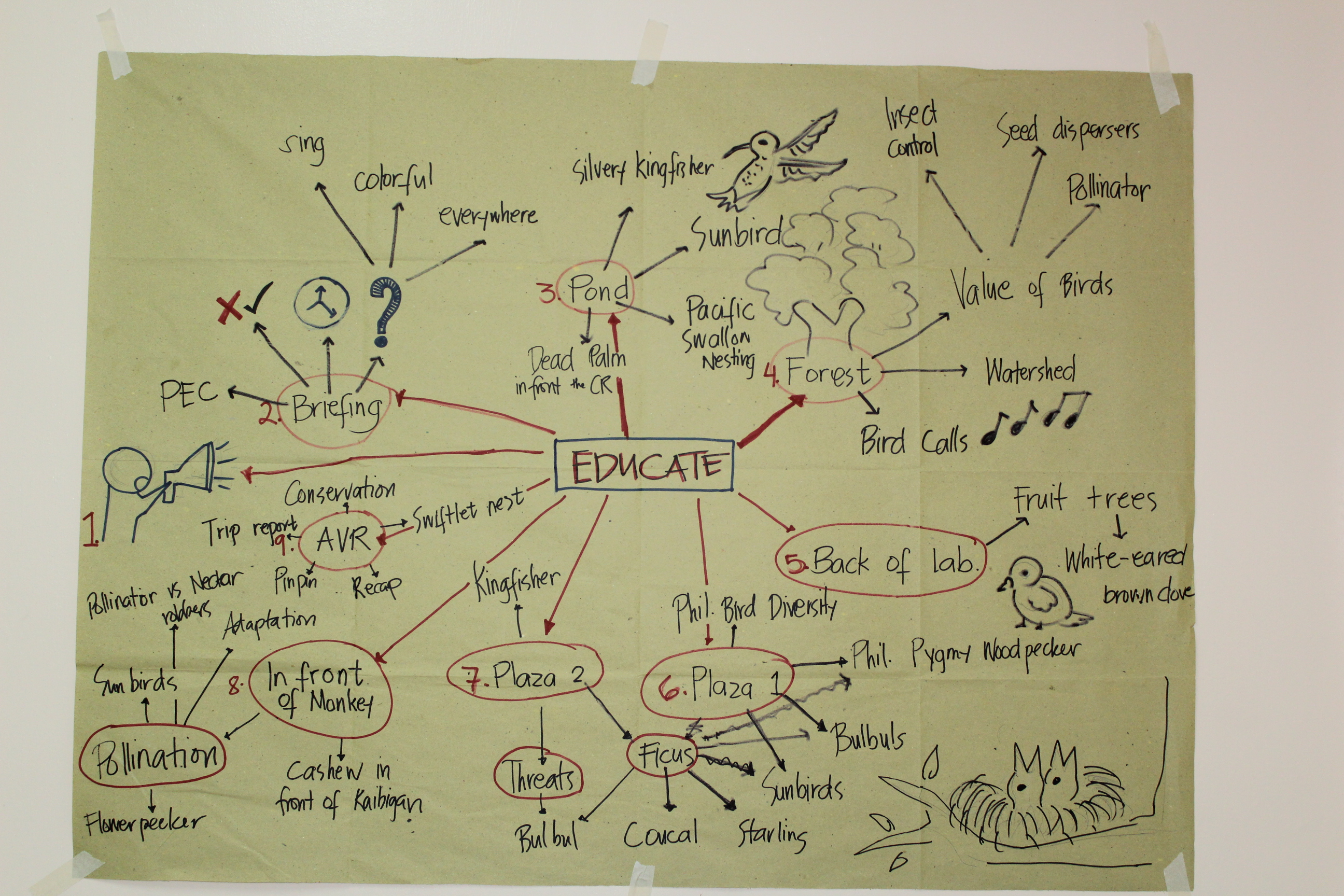 Mind map of a guided bird walk around the PEC. Photo by Philippine Eagle Foundation.