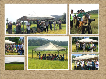 The first-ever raptor migration monitoring conducted in Sanchez Mira by the Cagayan State University students & supervising faculty members from 12 March to 15 April, 2016.