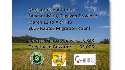 raptor migration count