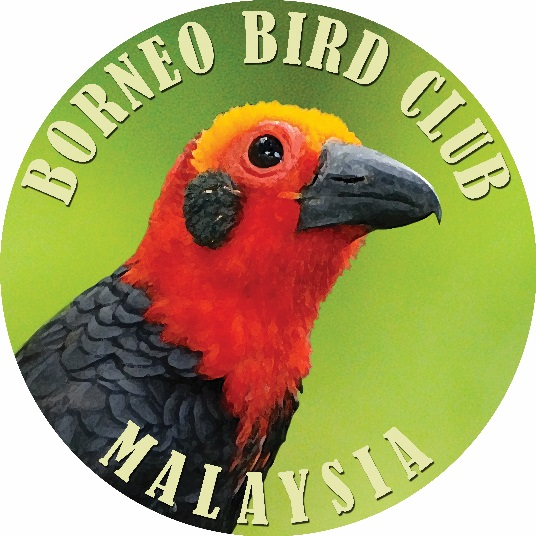 borneo-bird-club