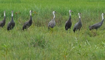 Siargao sighting: Rare migratory birds seen for first time in PH